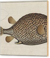 Spotted Trunk Fish  Wood Print