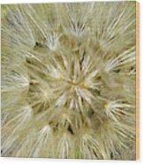 Dandelion Bloom Wood Print
