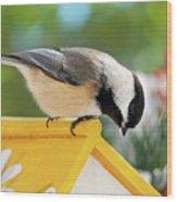 Spring Chickadee Wood Print