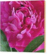 Spring Dahlia Wood Print
