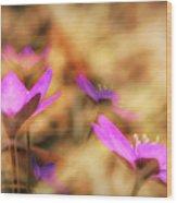 Spring Wild Flower 4 Wood Print