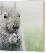 Squirrel Eating Nuts Wood Print
