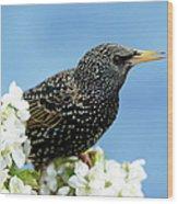 Star In Springtime Wood Print