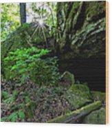 Starburst In The Woods Wood Print