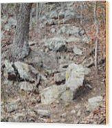Steep Trails Wood Print
