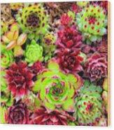 Succulent Garden Wood Print