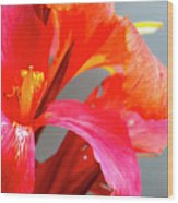 Summer Lilly Pink Wood Print