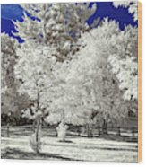 Summer Park In Infrared Wood Print
