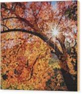 Sun Peaking Through The Autumn Colors  Wood Print