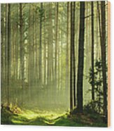 Sunbeams Breaking Through Pine Tree Wood Print