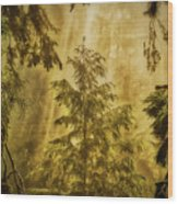 Sunbeams In The Foggy Forest #3 Wood Print