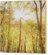 Sunbeams In The Forest Wood Print