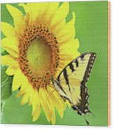 Sunflower And Swallowtail Wood Print