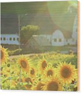 Sunflower Haze Wood Print