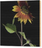 Sunflower With A View Wood Print