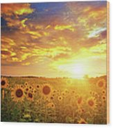 Sunflowers Field And Sunset Sky Wood Print