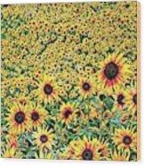 Sunflowers In Kansas Wood Print
