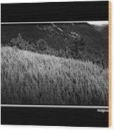 Sunlight On Ferns Poster Wood Print