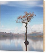 Sunny Afternoon On Loch Lomond Wood Print
