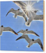 Sunshine And Seagulls Wood Print