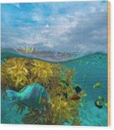 Surf Parrotfish, Damselfish And Basslet Wood Print