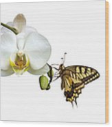 Swallowtail On White Orchid Wood Print