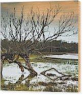 Swamp And Dead Tree Wood Print