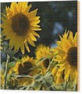 Sweet Sunflowers Wood Print
