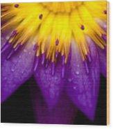 Symmetrical Lotus For Conceptual Photo Wood Print