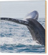 Tail Of Whalewhale Show The Tail Above Wood Print