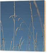Tall Grasses Swaying Against A Blue Sky Wood Print