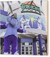 Tampa Bay Rays Mascot Wood Print