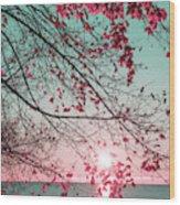 Teal And Fuchsia - Autumn Sunrise Reimagined Wood Print