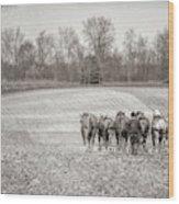 Team Of Six Horses Tilling The Fields Wood Print