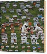 The Beekeepers Wood Print
