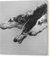The Borzois, Black And White Sketch, 3 Russian Wolfhounds Wood Print