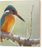 The Common Kingfisher Alcedo Wood Print