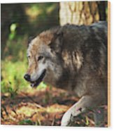 The Gray Wolf Wood Print