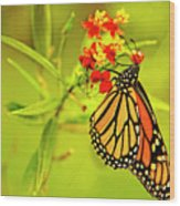 The Monarch Butterfly Wood Print