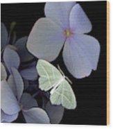 The Night Moth Wood Print