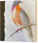 The Passenger Pigeon  Wood Print