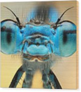 The Picture Shows A Beautiful  Damesfly Wood Print
