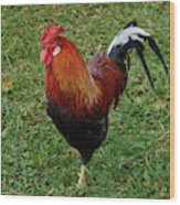 The Pose Of The Rooster Wood Print