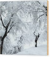 The Pure White Of Snow Wood Print