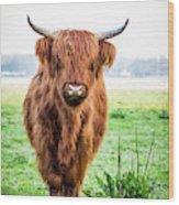 The Scottish Highlander Wood Print