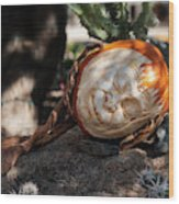 The Sleeping Pumpkinman  Wood Print