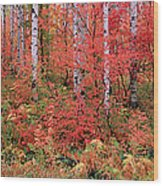 The Wasatch Mountain Forest Of Maple Wood Print