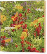 The World Laughs In Flowers - Poppies Wood Print