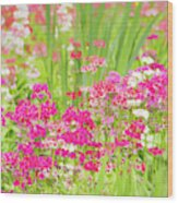 The World Laughs In Flowers - Primula Wood Print