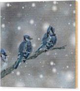 Three Blue Jays In The Snow Wood Print